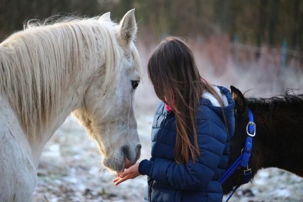 horse-1130195